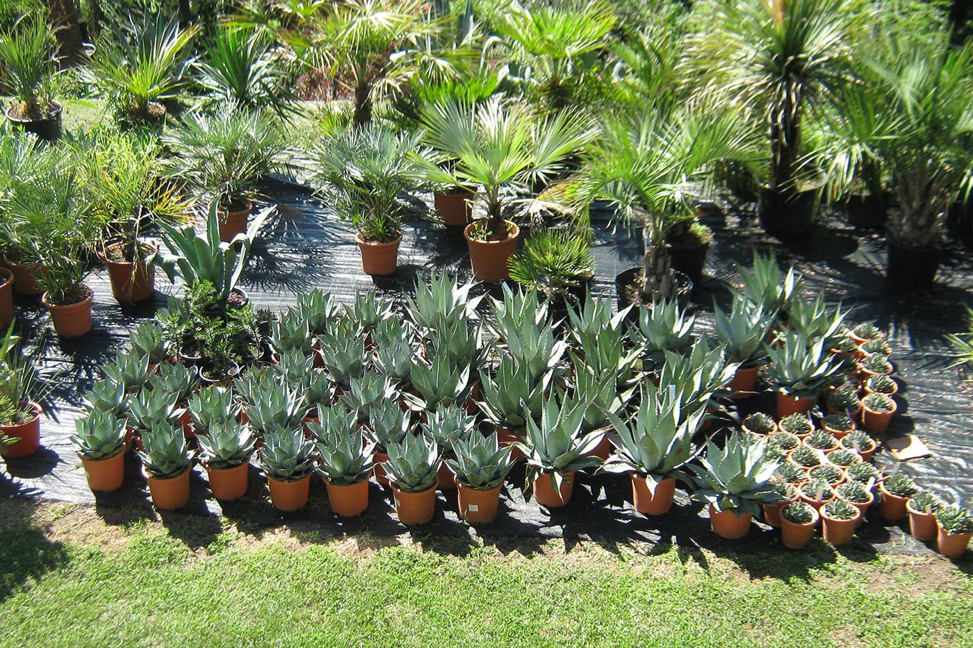 pflanzenverkauf_web